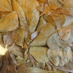 Curryblätter BIO  / ganz 50 Gramm